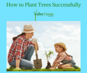 how to plant trees successfully