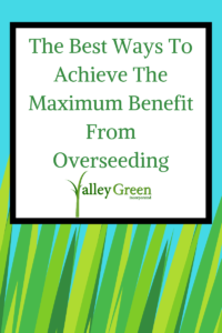 The Best Ways To Achieve The Maximum Benefit From Overseeding