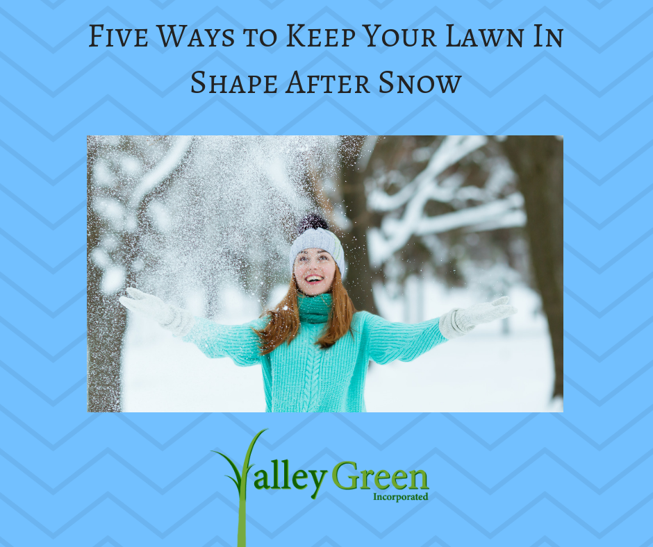 Five Ways to Keep Your Lawn In Shape After Snow