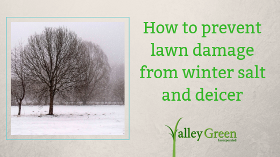 How to prevent lawn damage from winter salt and deicer