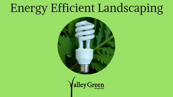 Energy Efficient Landscaping