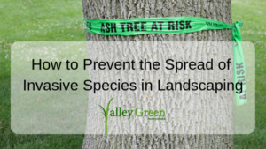 How to Prevent the Spread of Invasive Species in Landscaping