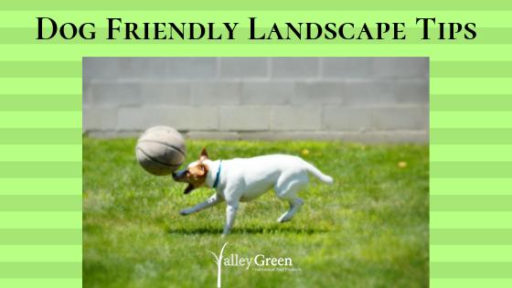 dog friendly landscape tips
