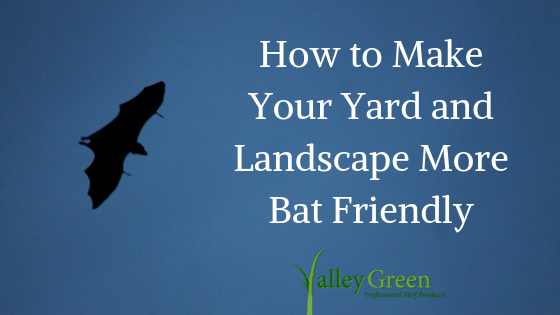 How to Make Your Yard and Landscape More Bat Friendly