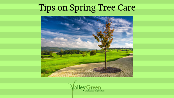Tips on Spring Tree Care