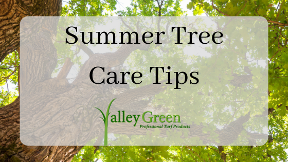 summer tree care tips