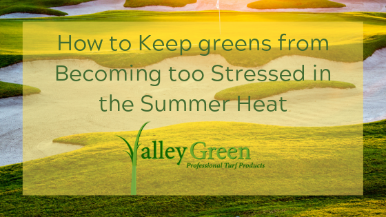keep greens from Becoming too Stressed in the Summer Heat