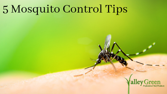 5 Mosquito Control Tips