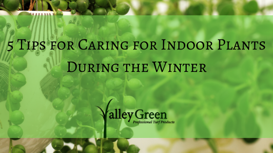 5 Tips for Caring for Indoor Plants During the Winter