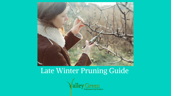 late winter pruning