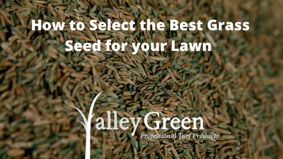 How to Select the Best Grass Seed for your Lawn