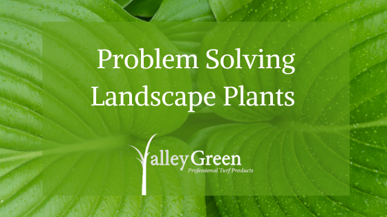 Problem Solving Landscape Plants