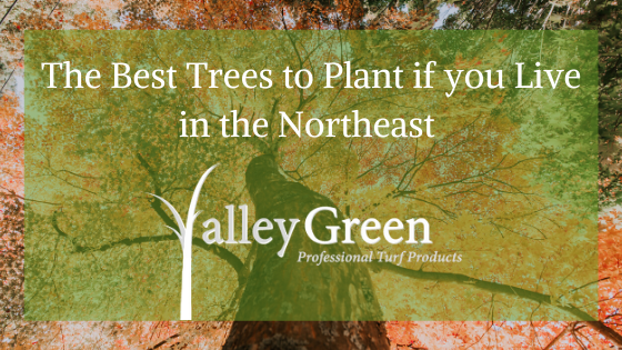 The Best Trees to Plant if you Live in the Northeast