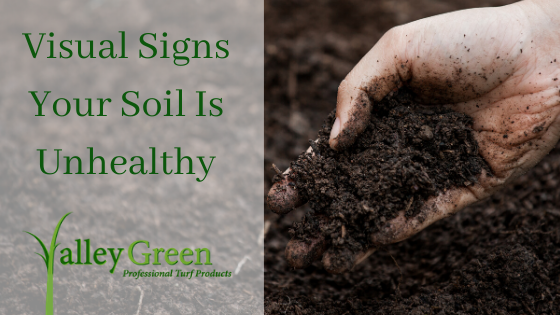 Visual Signs Your Soil Is Unhealthy