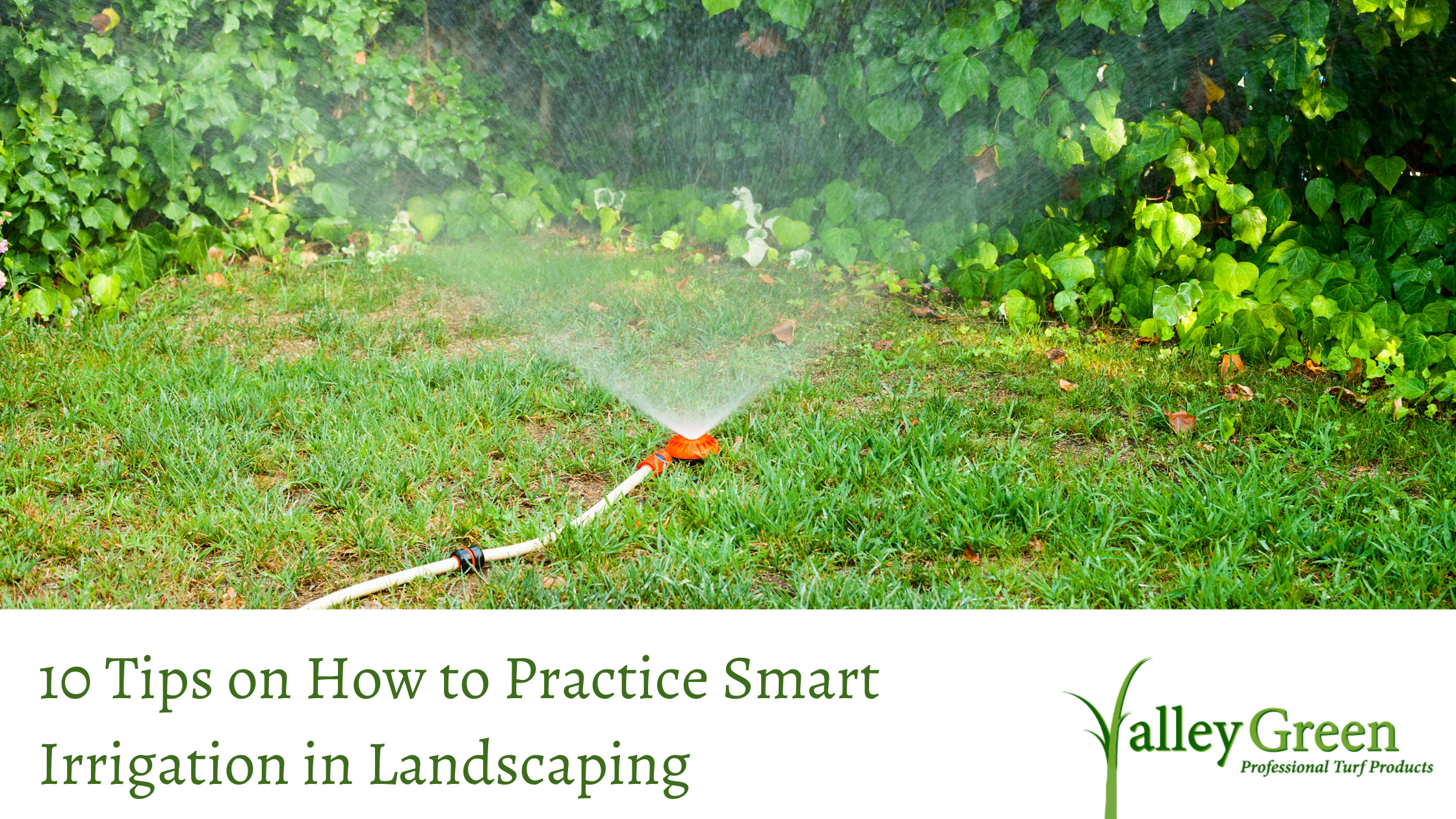 10 Tips on How to Practice Smart Irrigation in Landscaping