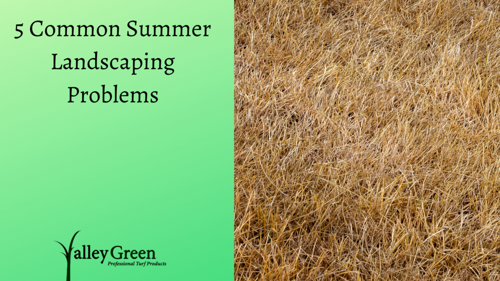 5 Common Summer Landscaping Problems