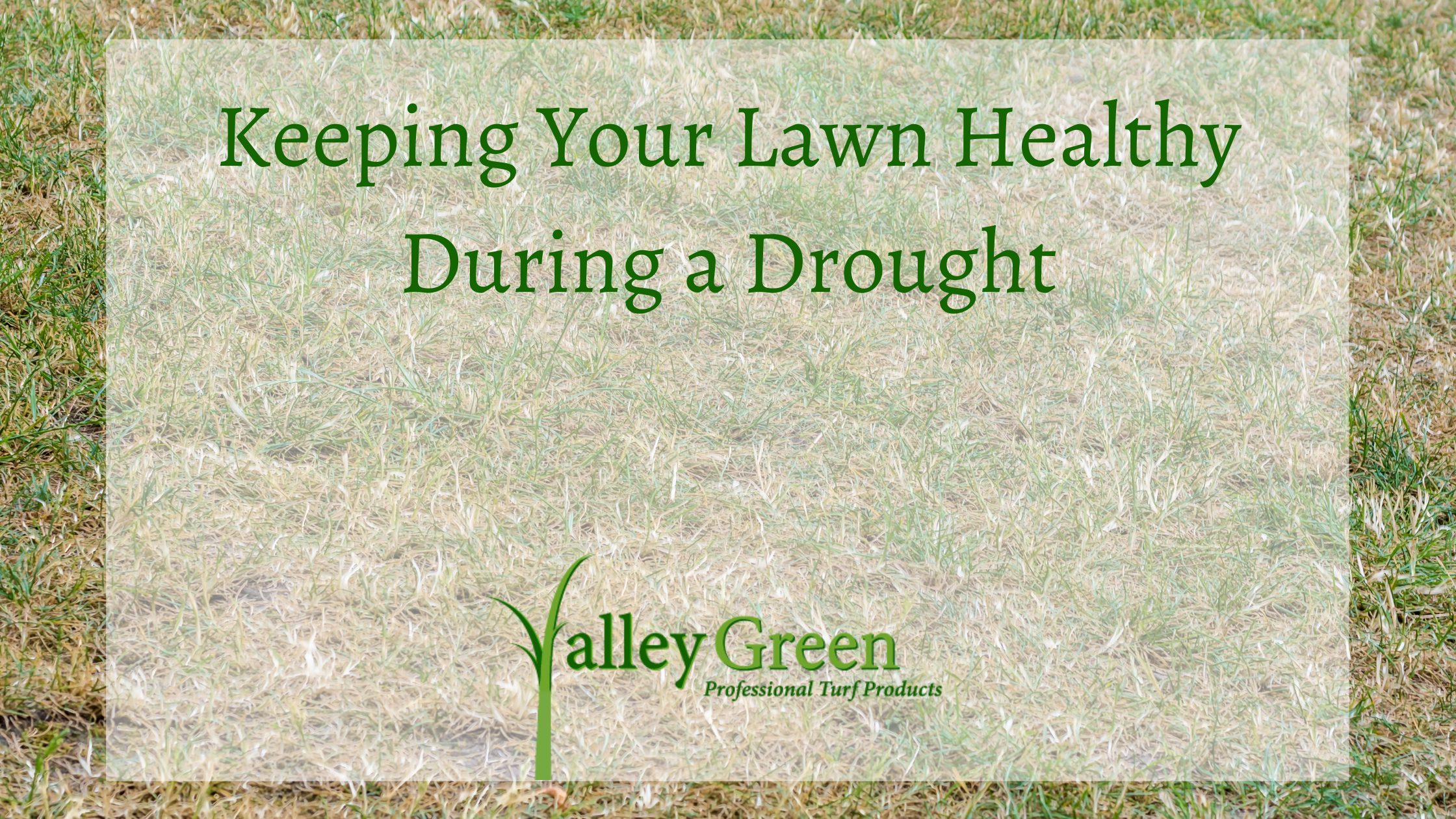 Keeping Your Lawn Healthy During a Drought