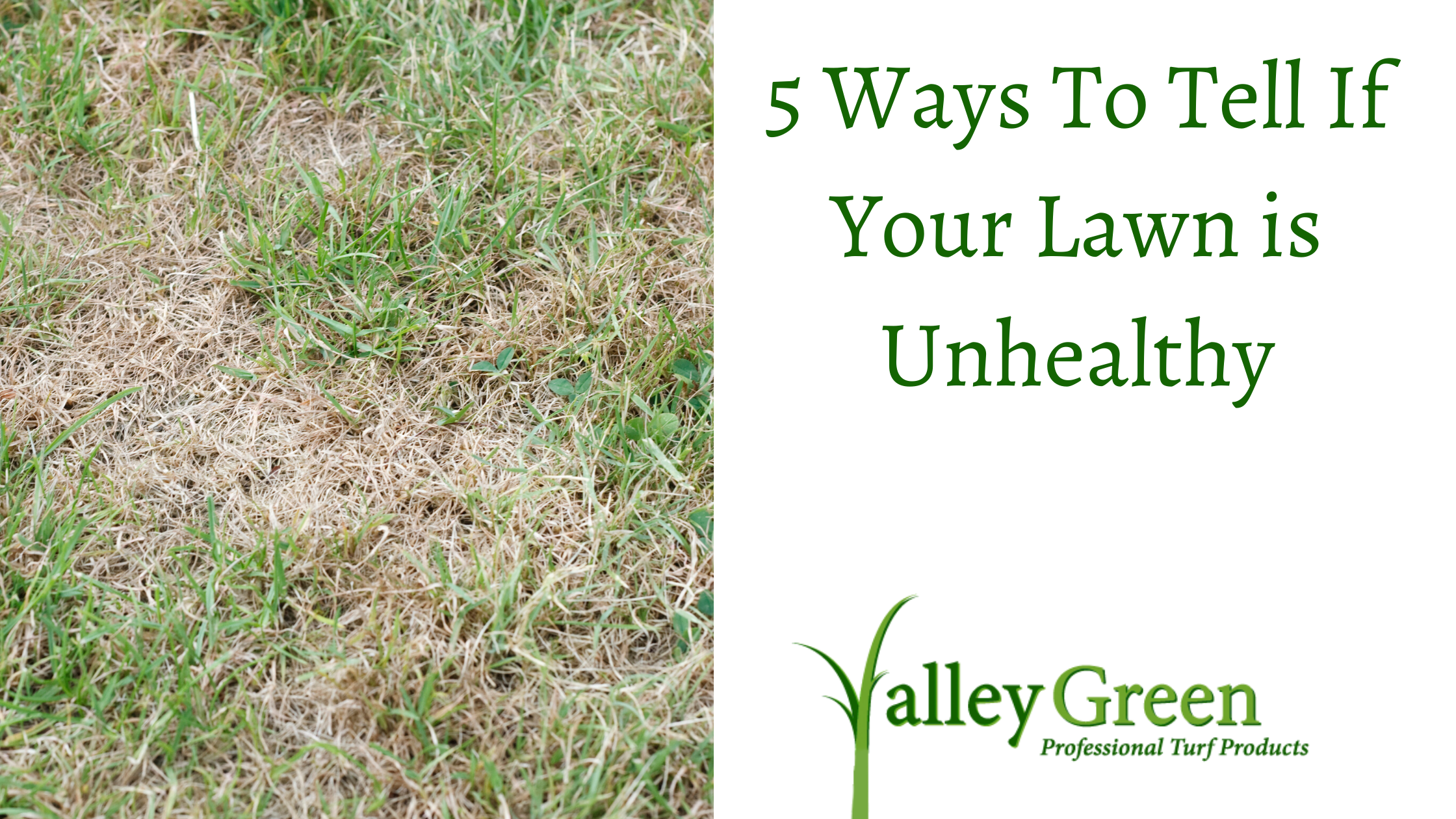 Ways to tell if your lawn in unhealthy