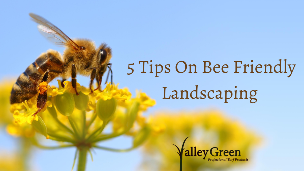 5 Tips On Bee Friendly Landscaping