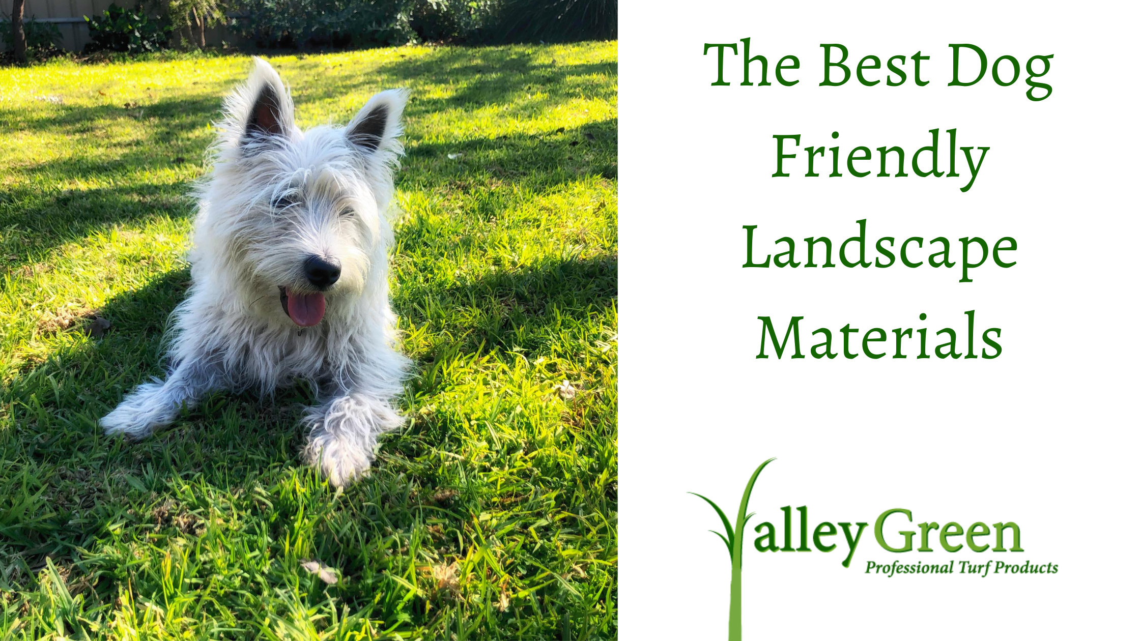 The Best Dog Friendly Landscape Materials
