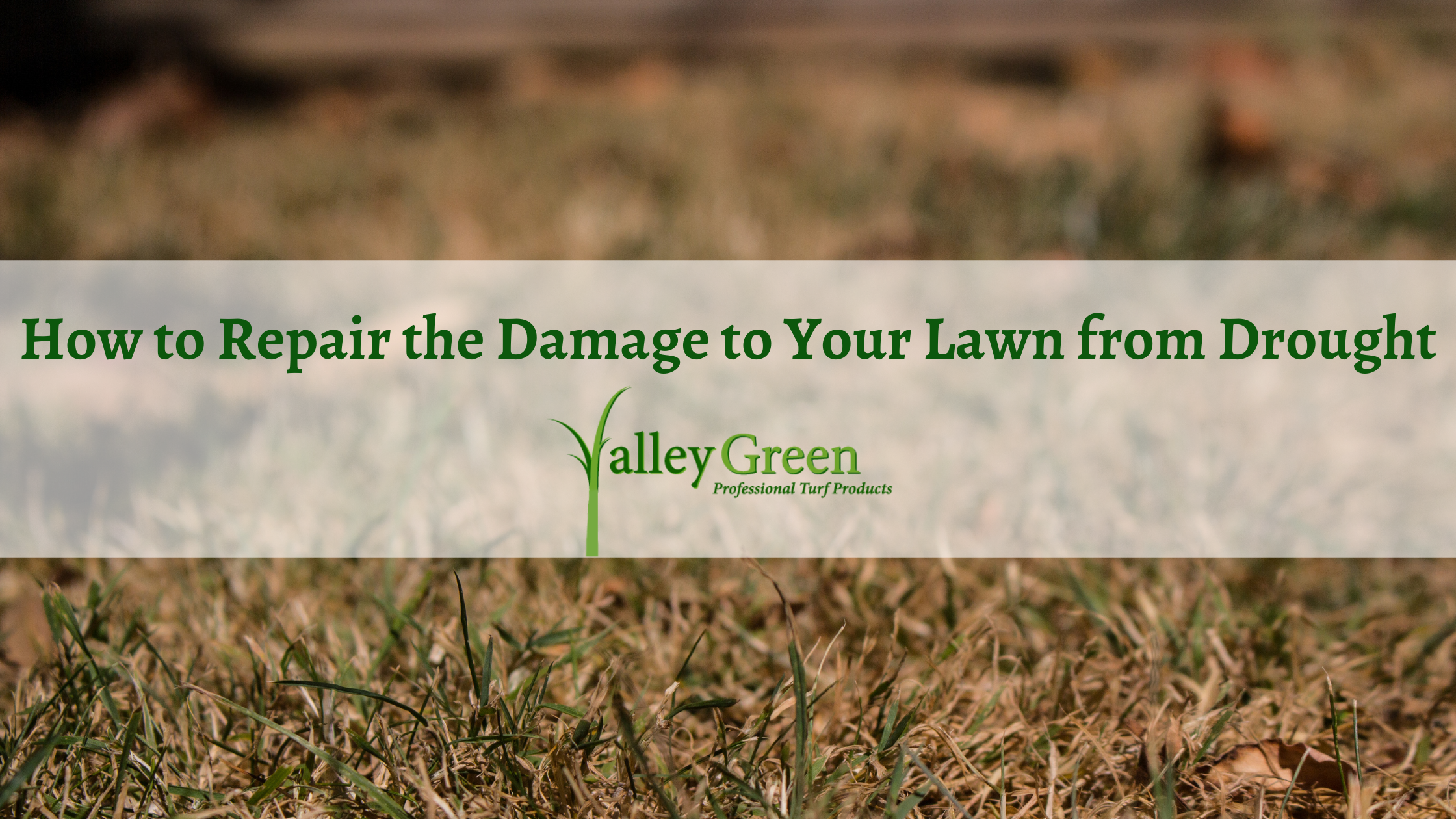 How to Repair the Damage to Your Lawn from Drought