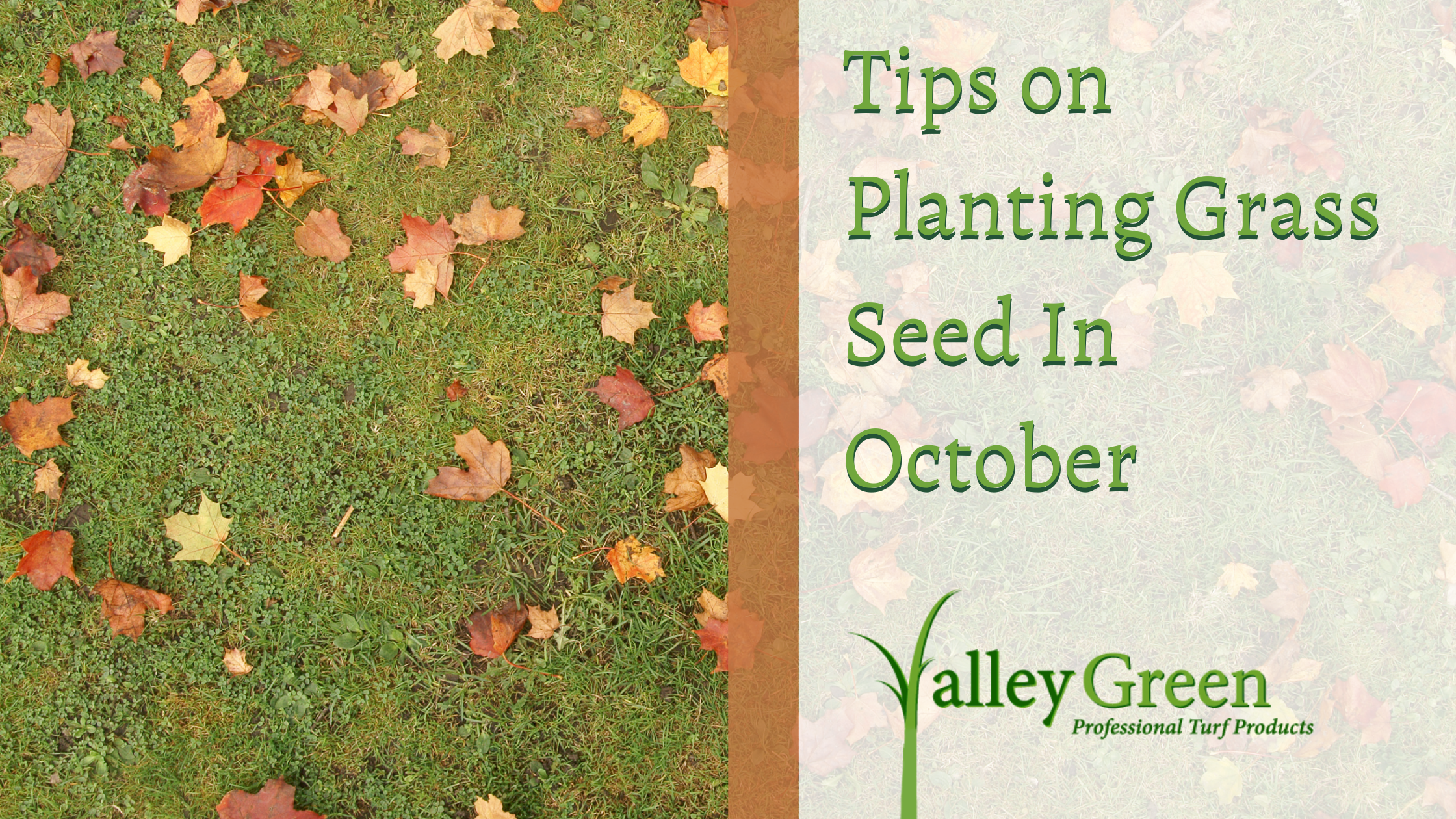 Tips on Planting Grass Seed In October
