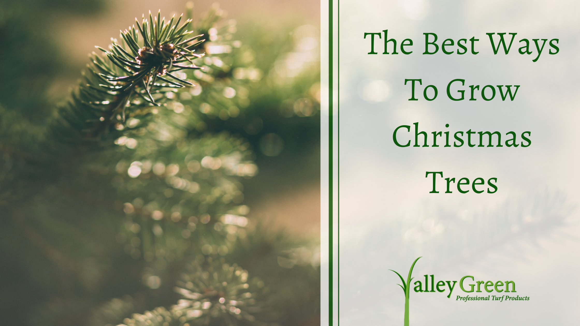 The Best Ways To Grow Christmas Trees