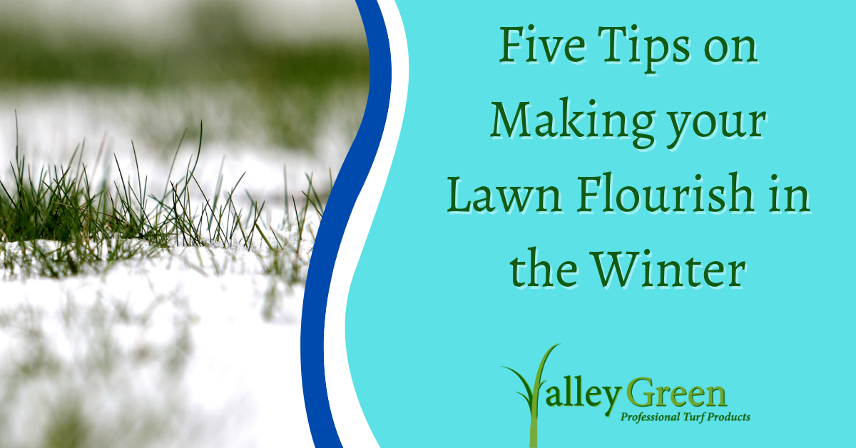 Five Tips on Making your Lawn Flourish in the Winter
