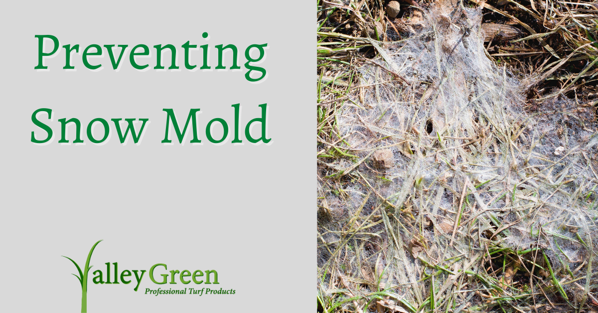 preventing snow mold