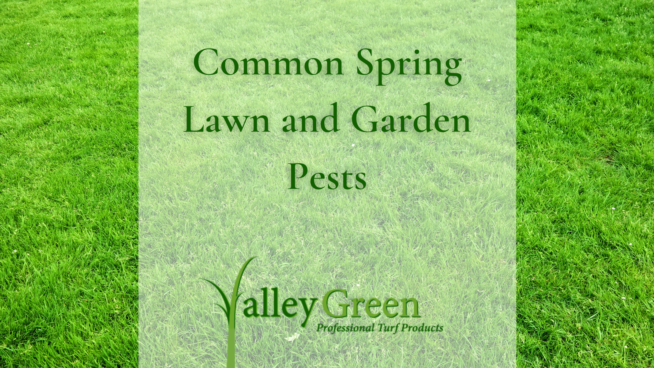 Common Spring Lawn and Garden Pests
