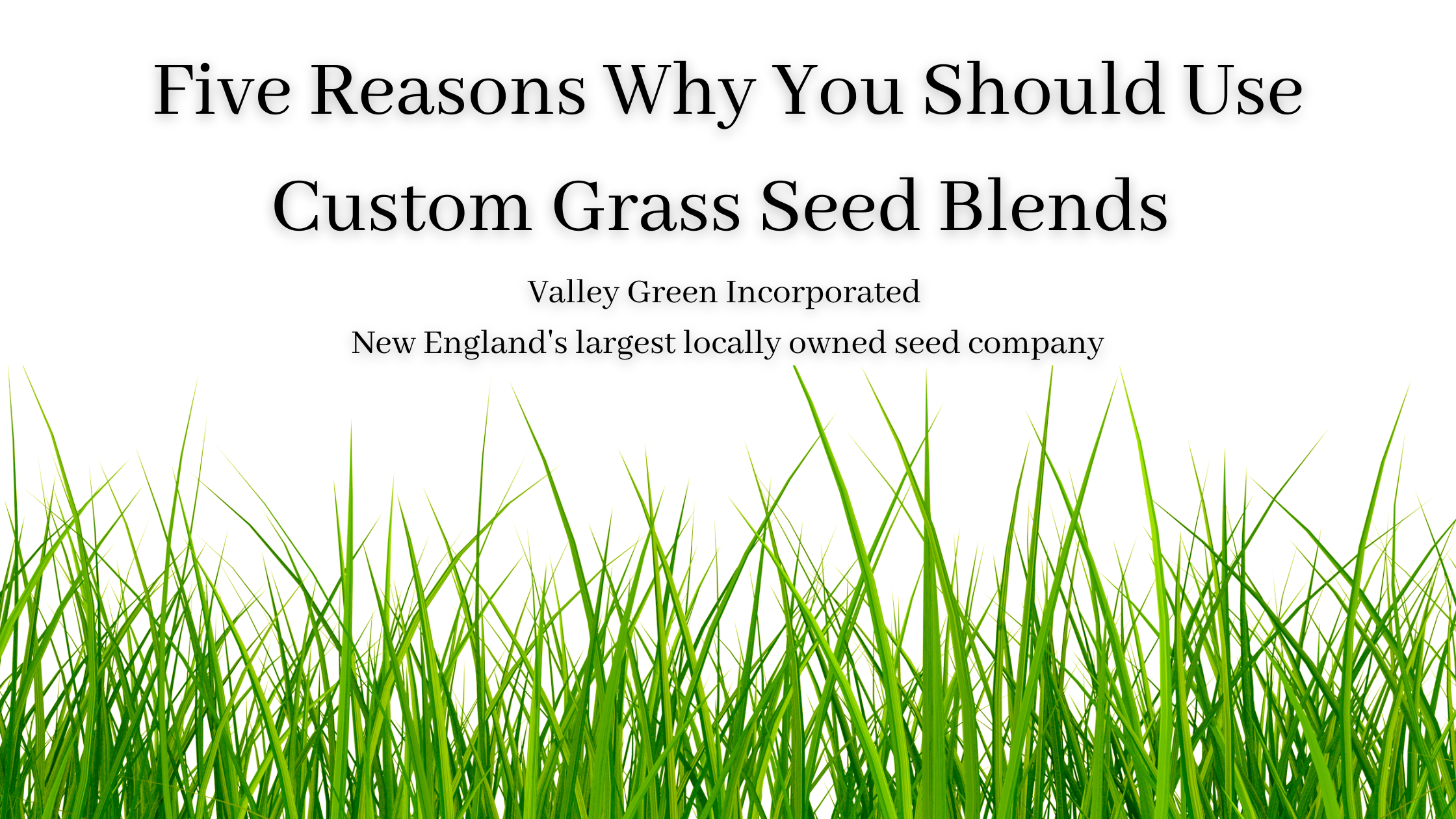 custom grass seed blends