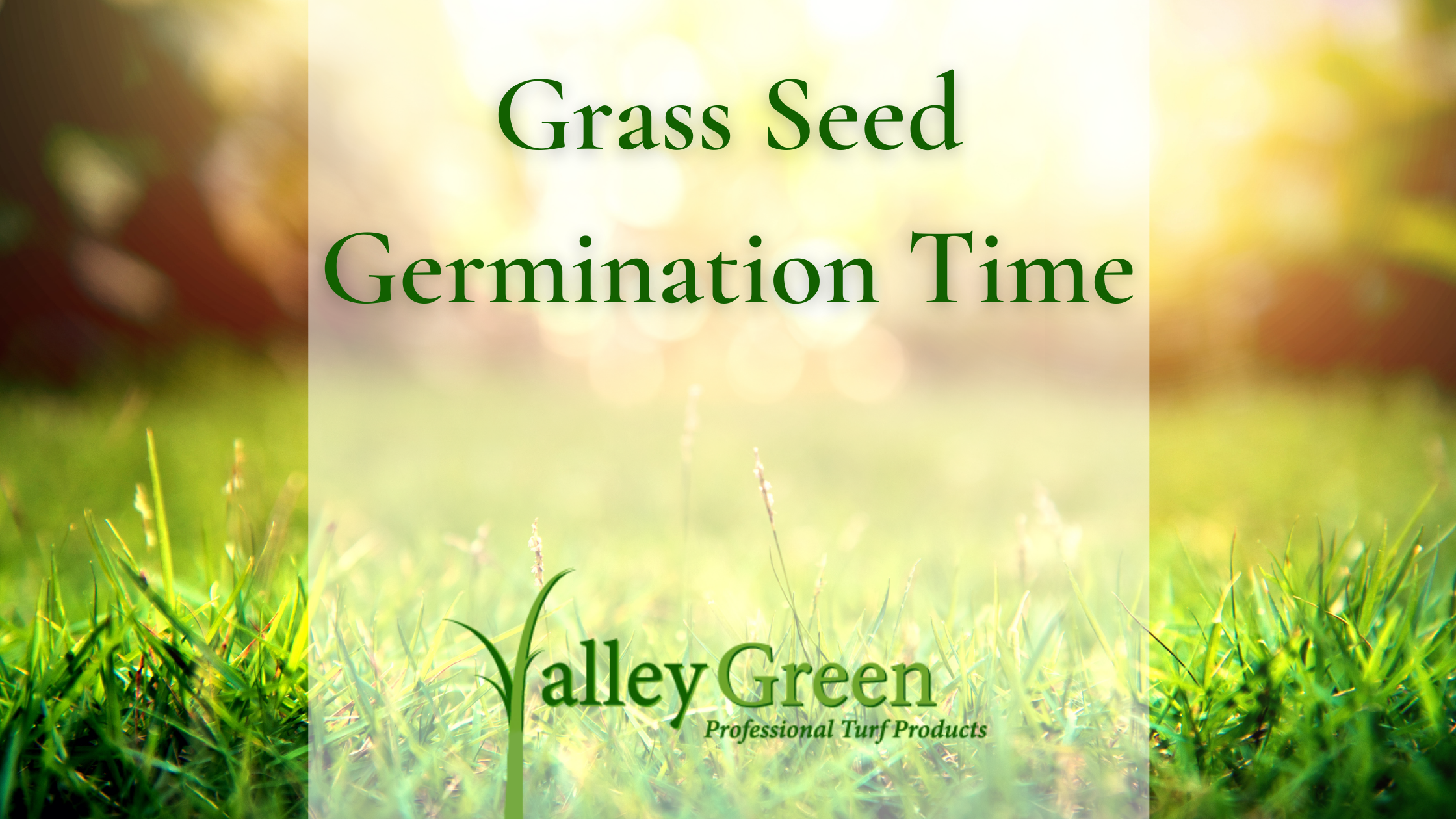 Grass Seed Germination Time
