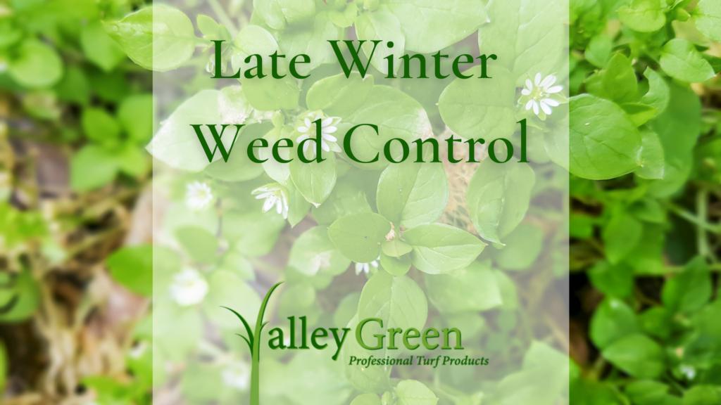 Late Winter Weed Control