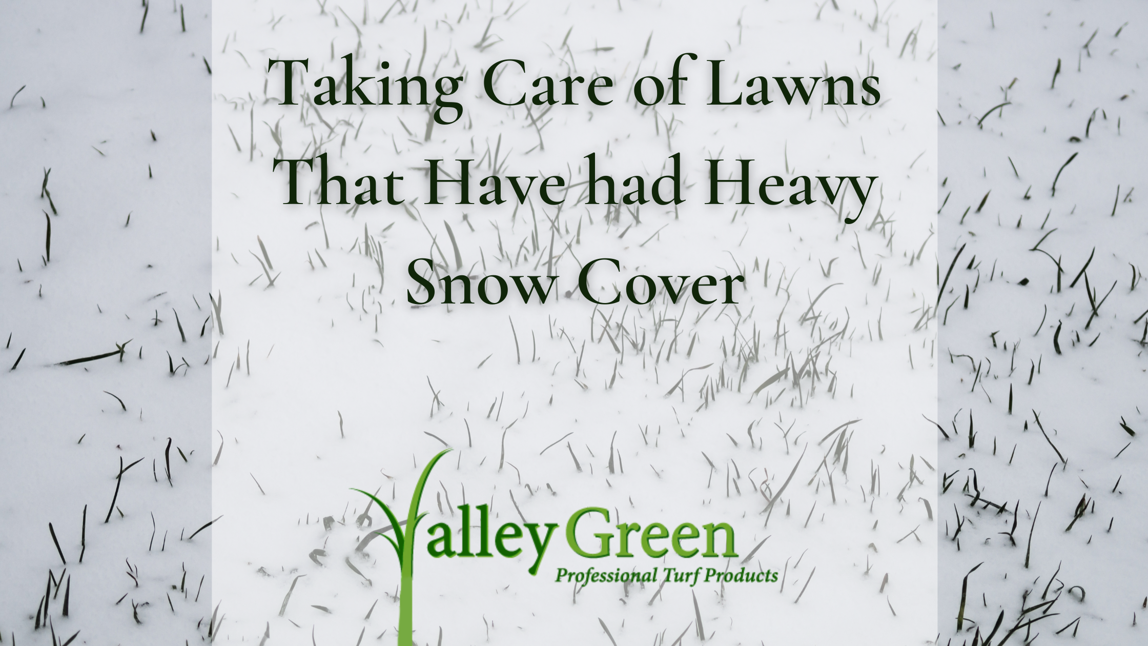 Taking Care of Lawns That Have had Heavy Snow Cover