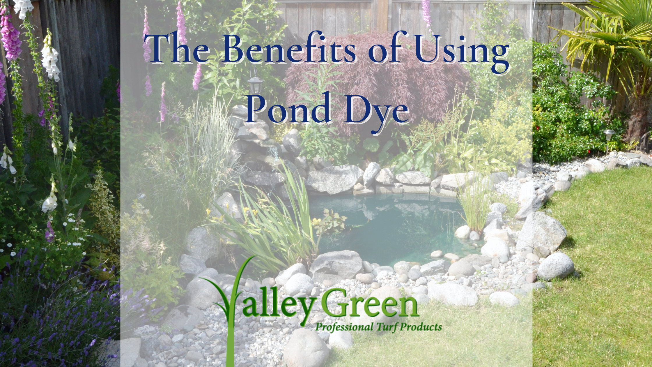The Benefits of Using Pond Dye