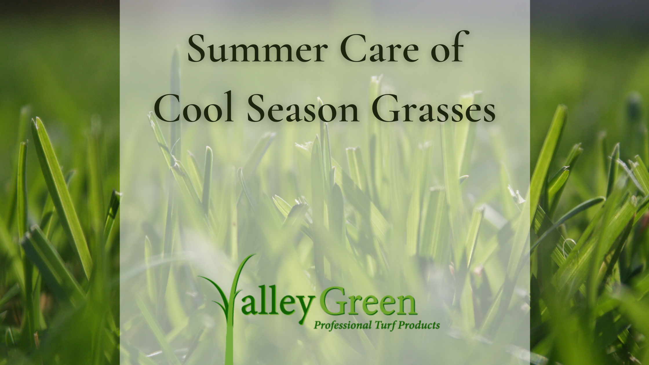 Summer Care of Cool Season Grasses