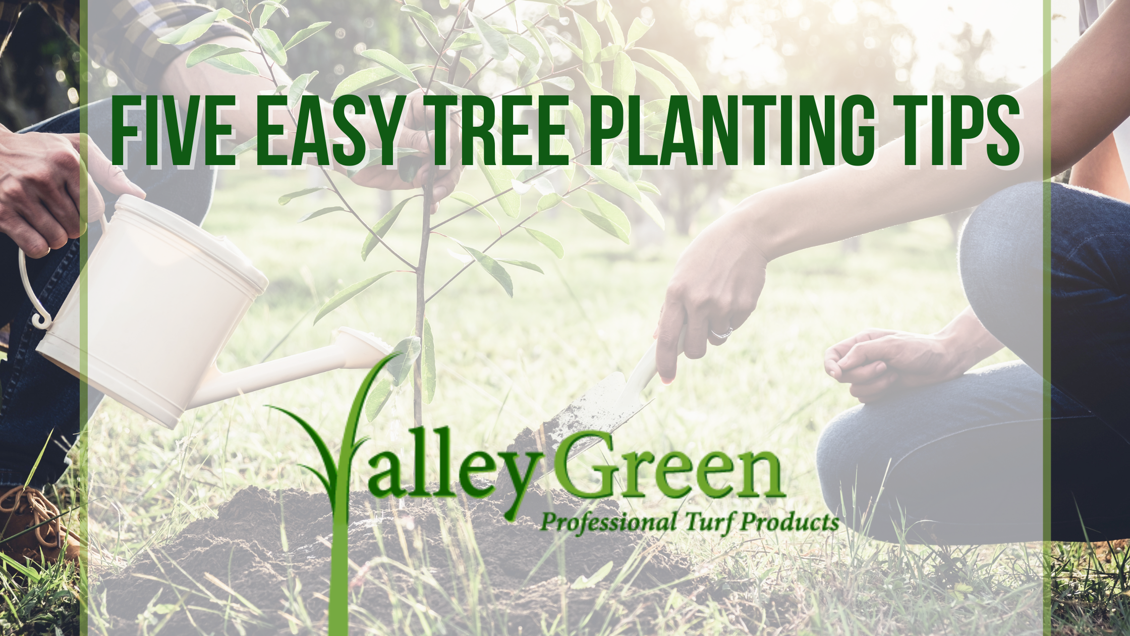 Five Easy Tree Planting Tips