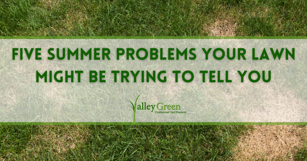 Five Summer Problems Your Lawn Might Be Trying to Tell You